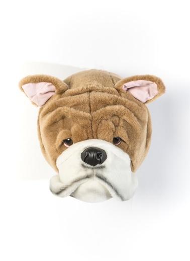 İngiliz Bulldog Matthew-Wild&Soft